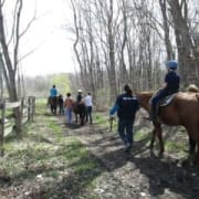 A trail picture with children on the back of horses