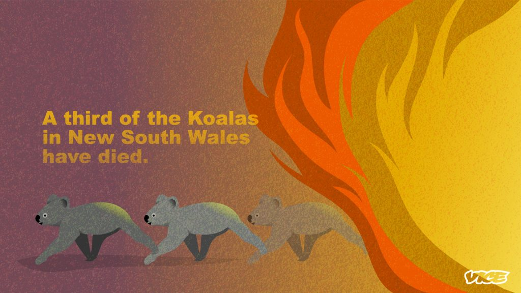 The fires have killed people and animals / Australian bushfires statistics infographic by Vice.