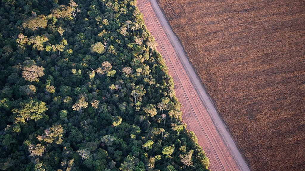 The boundary between Tanguro Farm and the Amazon rainforest in Mato Grosso, Brazil. Courtesy Of Chris Linder.