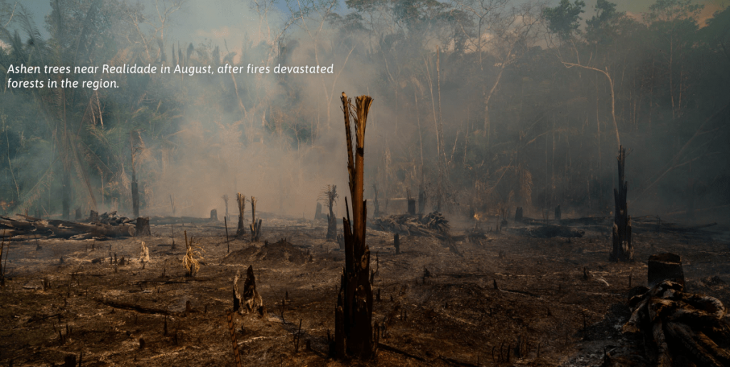 Ashen trees near Realidade in August, after fires, devastated forests in the region/ Photo by The Time.