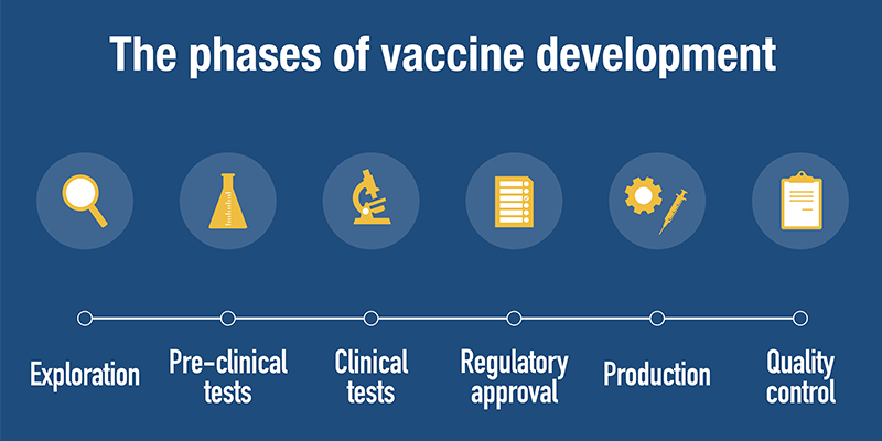 Image of the phases of vaccine development within the clinical trial process