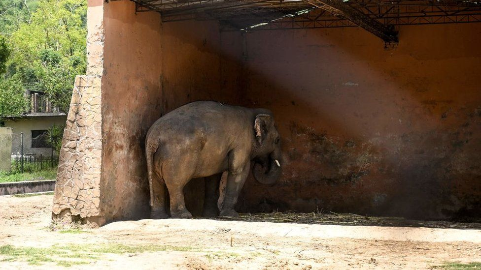 Image of Kavaan the Elephant facing a dark corner of the wall, showing signs of mental illness during his captivity in the Islamabad Zoo