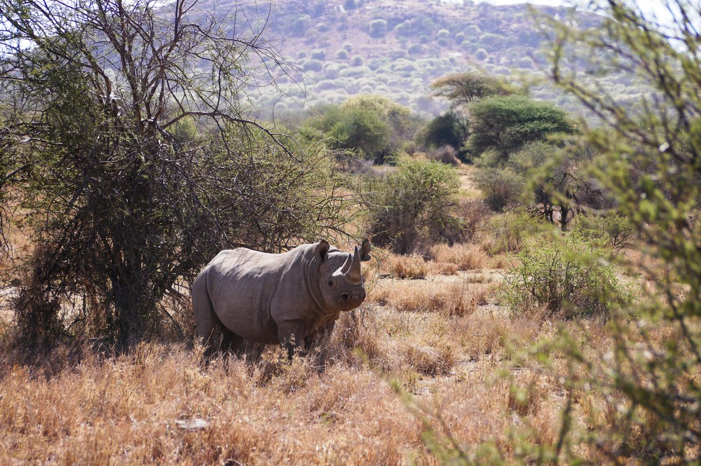 Image by Save the Rhino